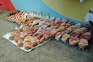 Roatan shells