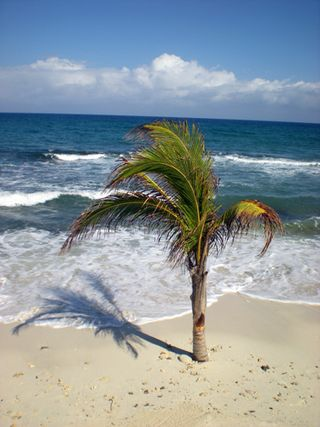 Palm tree web